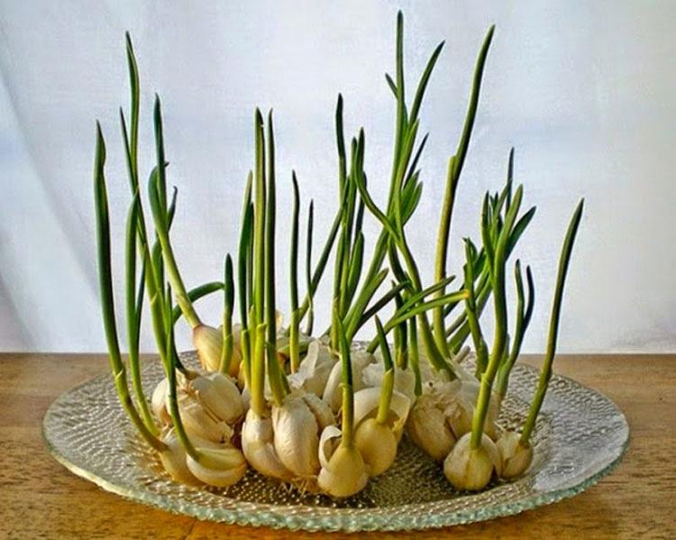 Ocho vegetales que se pueden comprar una vez y luego crecer para siempre