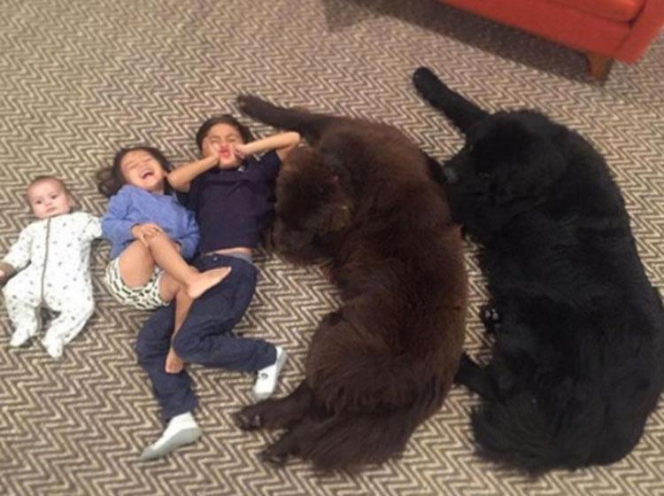 Parecen 2 perros normales, pero cuando se levantan... ¡Increíble!