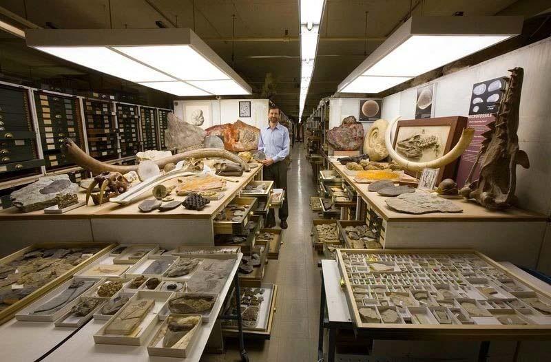 Hay miles de cajones en la habitación secreta del Smithsonian. Lo que hay dentro es increíble
