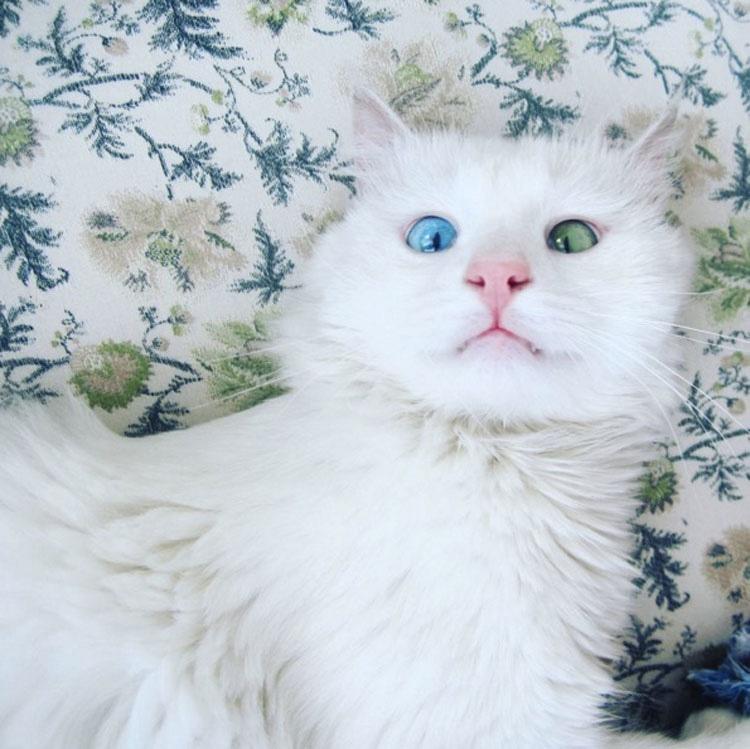 Parece un gatito normal de siesta. ¿Pero cuando abre los ojos? ¡IRREAL!