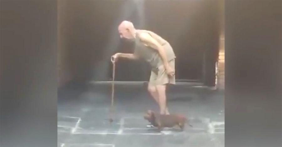 Este abuelo da un paseo todos los días. Ahora mira lo que hace su pequeño perro...