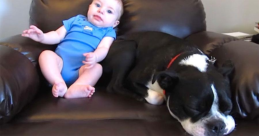 Este bebé se hace caca en su pijama, atención a la reacción del perro... ¡hilarante!