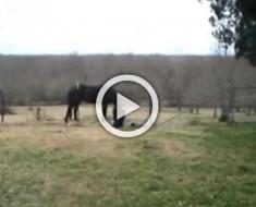 """Este gran caballo estaba actuando de forma extraña, ¿pero con quién """"hablando""""?"""