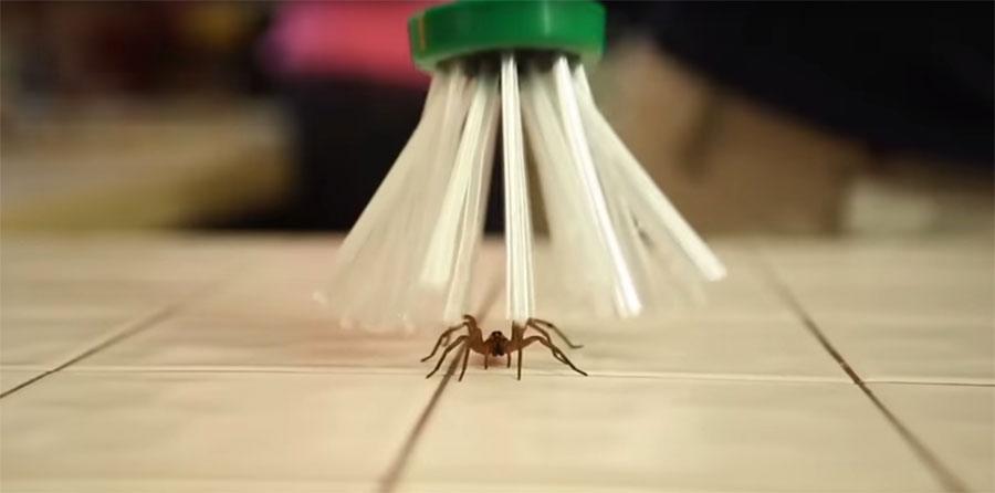 Su hijo tenía miedo a las arañas, así que inventó algo inteligente para capturarlas