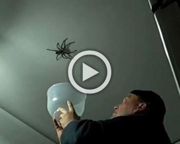 Este padre hizo lo último que se debe hacer cuando se ve una araña ENORME