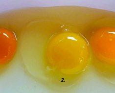 ¿Podrías decir cuál de estos huevos es de una gallina saludable? La respuesta es increíble