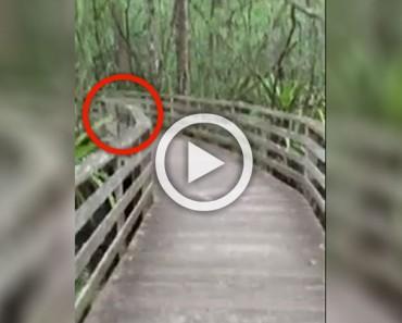 Esta mujer estaba paseando por la naturaleza cuando se encontró cara a cara con su peor pesadilla