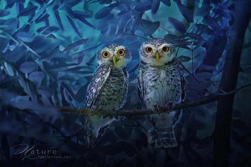 Estas impresionantes fotos te harán ver a los búhos de una forma completamente diferente