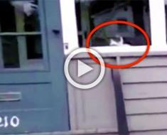 No creían al cartero que este gato hacía esto todos los días... ¡Así que lo atraparon en cámara!