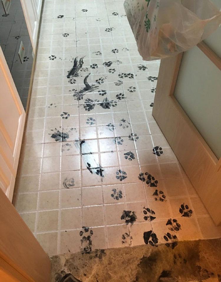 Este husky se quedó solo en casa. Ahora mira el caos épico que organizó