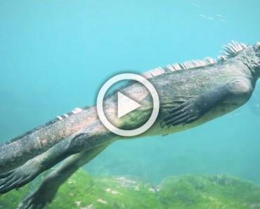 Unos buzos detectan a esta criatura nadando de forma extraña, pero espera a ver lo que come...