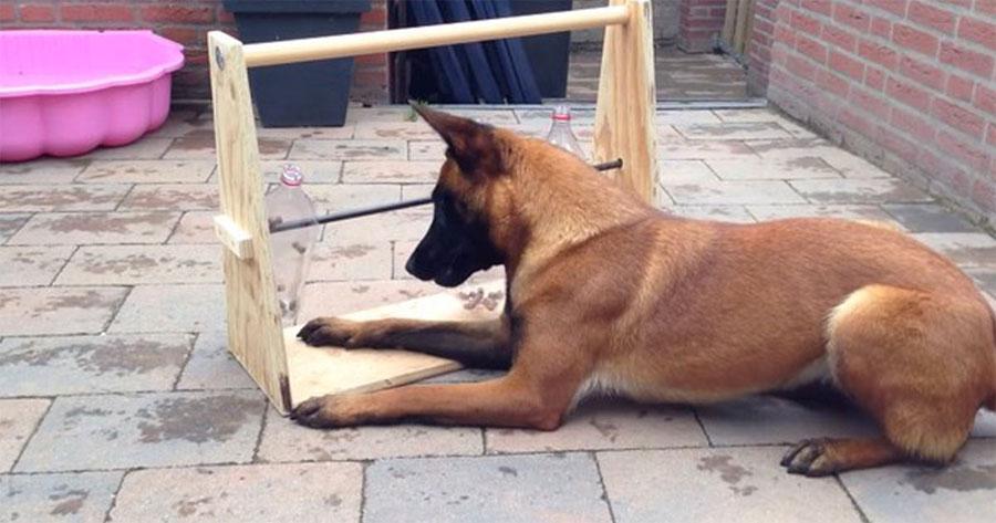 Construyó esta simple cosa para su perro, vi su reacción y... ¡estoy haciendo una yo!
