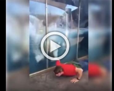 Este hombre se pone a hacer flexiones en el zoo... ¡ahora mira la reacción del oso polar!