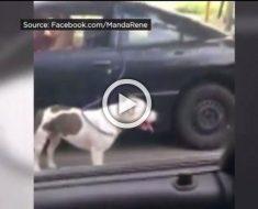 """Momento impactante en el que una mujer es filmada """"paseando"""" a su perro mientras conduce"""