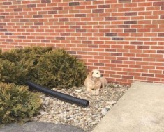 Este perro se niega a moverse de su lugar frente a una iglesia. ¿La razón?