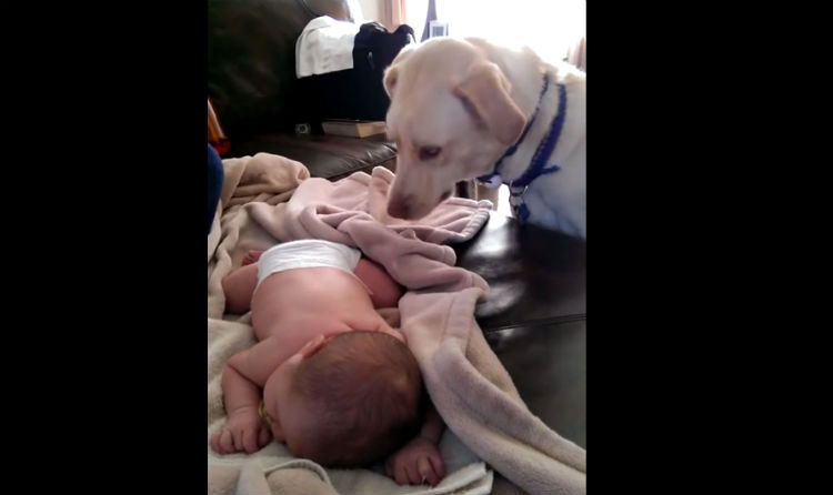 """Le presentan a su """"hermanito"""" recién nacido. Ahora mira lo que hace al bebé con su nariz"""