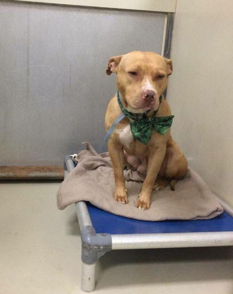 Este perro acaba de enterarse de que no sería adoptado, mira su cara cuando ocurre un MILAGRO