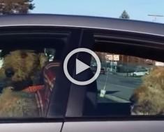 Su dueño los dejó sentados en el coche. La respuesta de los perros fue así de divertida