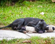 Ven a un perro callejero que duerme con un viejo peluche. Pero cuando vuelven, increíble...