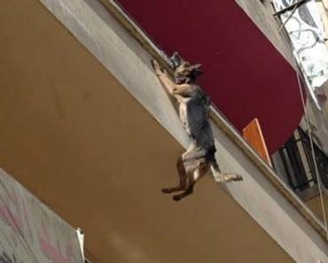 Había estado encadenada a un balcón siempre... Hasta que hizo algo desgarrador