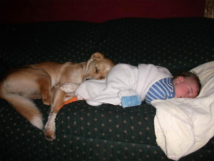 Dicen que los perros olfatean los vientres de las embarazadas por esta razón. Nunca lo hubiese adivinado