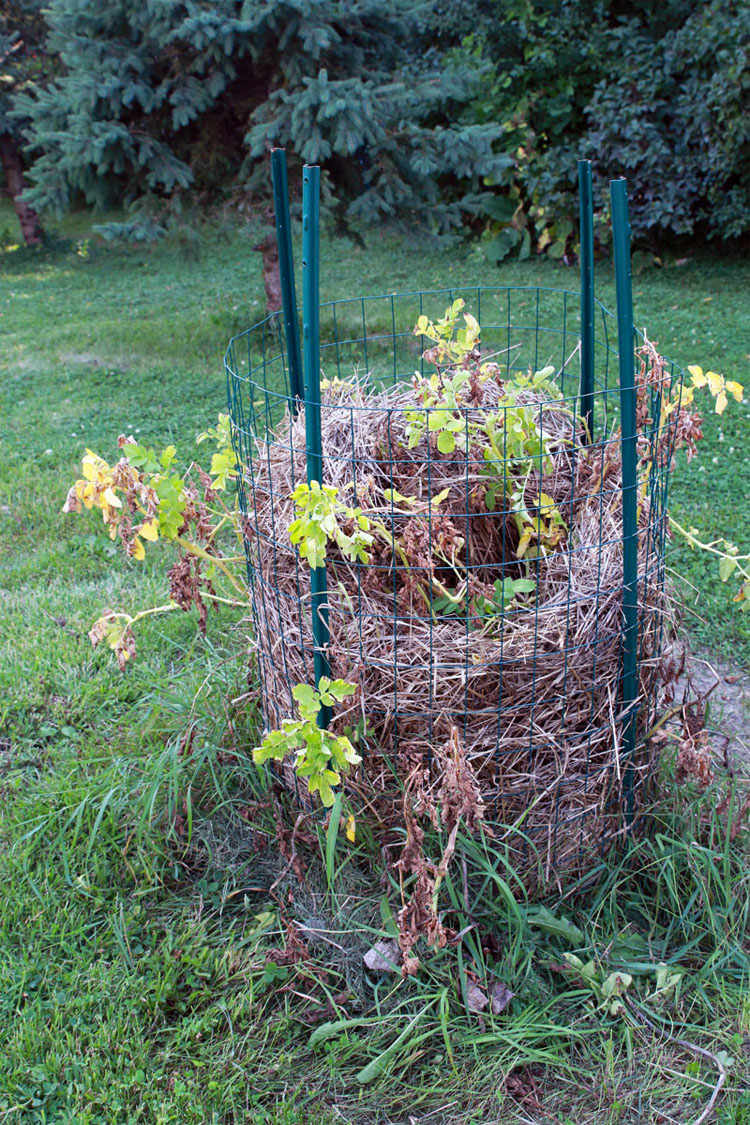 Dejó caer unas patatas en este nido de paja. Parece extraño, ¿pero unos meses más tarde? ¡Increíble!