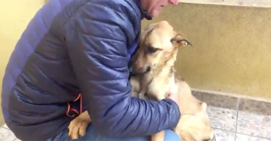 Encuentra a un perro perdido vagando por las calles, lo recoge en brazos y ve su cuerpo...