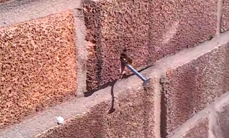 Notó un clavo extraño al lado de su casa. Ahora mira cuando comienza a moverse...