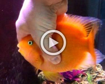 Este pez no puede esperar a ver a su dueño todas las noches. ¿A que no sabes por qué?