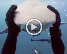 Al principio pensé que este tiburón le atacaba. Lo que hizo en su lugar me sorprendió absolutamente