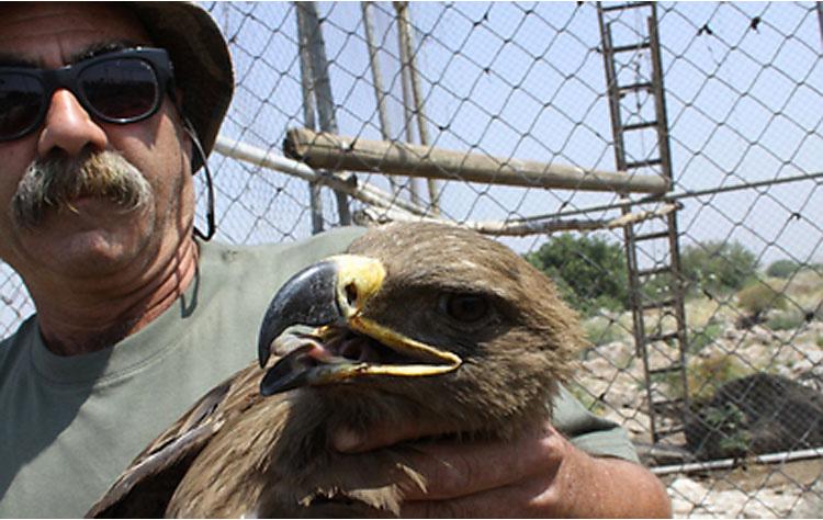 No podían entender lo que le pasaba a esta águila. Hasta que le hicieron una radiografía...