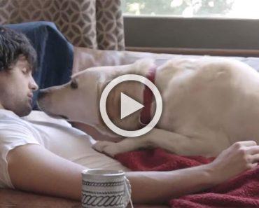 Ha tenido a su perro desde que era un cachorro, pero mira cuando él no viene a casa una noche