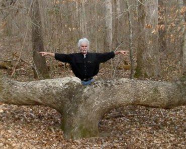 Puede que hayas visto estos árboles en el bosque, pero no creerás quién los puso allí