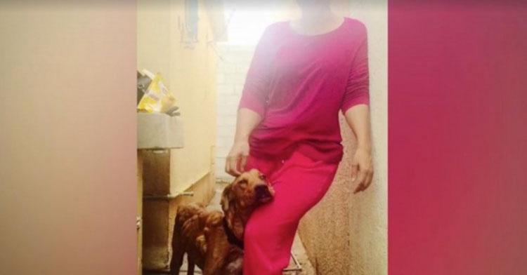 Cuando vio a este perro, se horrorizó... Después hizo algo que quizás nadie más haría