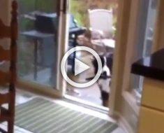 Un perro grande se asoma cautelosamente en la casa, pero mira lo que lleva en su boca...