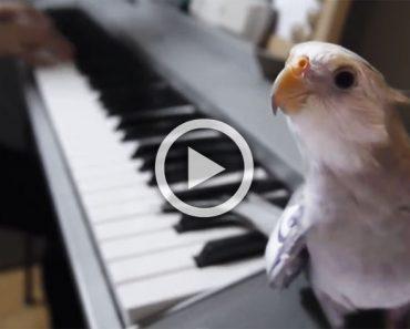Esta pequeña cacatúa tiene un INCREÍBLE talento... ¡Escucha con atención!