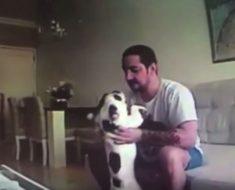Su perro actuaba de forma extraña cuando su novio estaba cerca, así que puso una cámara...