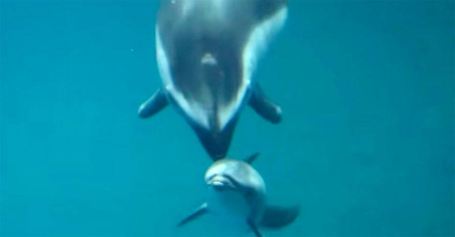 Delfín da a luz a su cría. Pero segundos después, los trabajadores del acuario se quedan SORPRENDIDOS