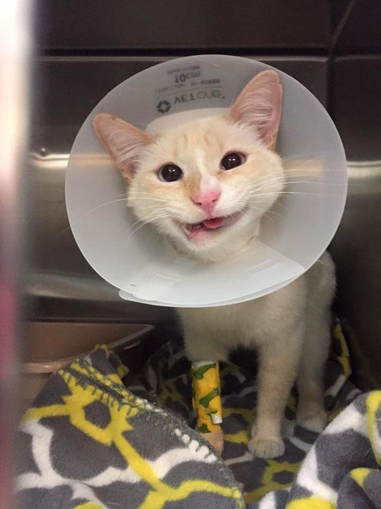 Este gatito rescatado tiene la mandíbula dañada, pero eso no impide que pueda tener una hermosa sonrisa