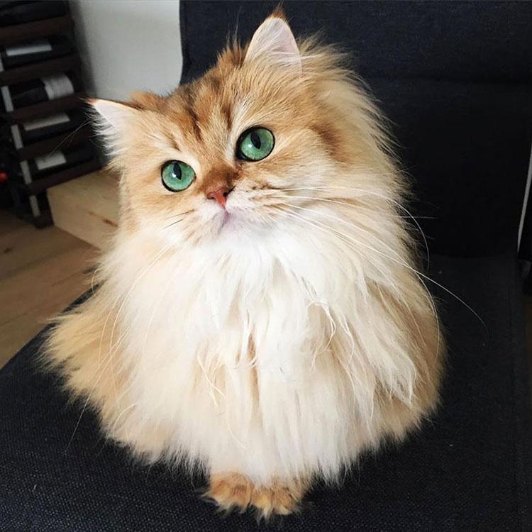 La gente dice que es el gato más fotogénico del mundo... ¡y estamos de acuerdo! Mira sus fotos...