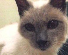 Se llama Scooter, tiene 30 años y es el gato vivo más viejo del mundo