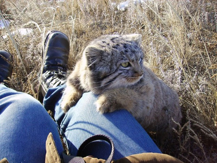 Un granjero ruso encuentra este extraño gatito en su establo... Y resultó ser mucho más