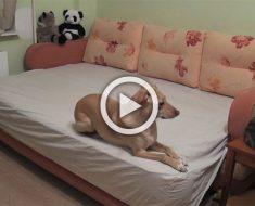 ¿Te has preguntado que hacen tus perros cuando te vas de casa? Este dueño puso una cámara...