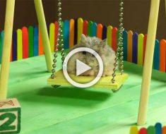 Este pequeño hamster tiene su propia zona de juegos. ¿Qué hace en ella? ¡Sobrecarga de ternura!