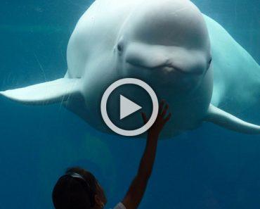 """Increíble el comportamiento """"humano"""" de esta beluga con estos tres niños..."""