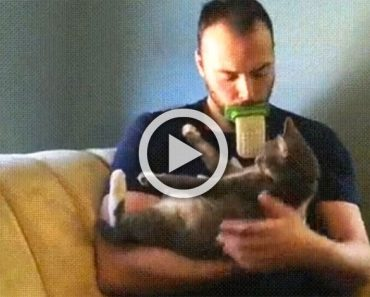 El controvertido juguete para tu gato que divide a Internet. ¿Qué te parece? ¿Lo usarías?