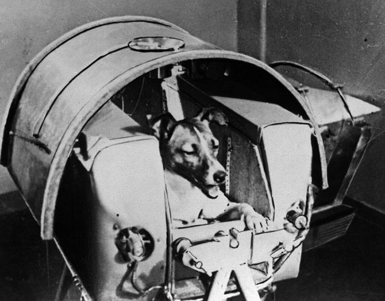 30 años después de lanzar un perro al espacio, los científicos piensan ahora que fue un experimento brutal