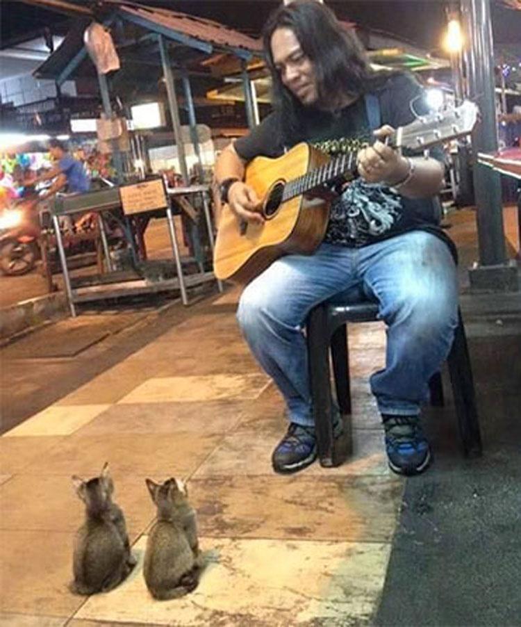 Este músico callejero estaba a punto de dejarlo, pero entonces se presentaron estos gatitos... 1