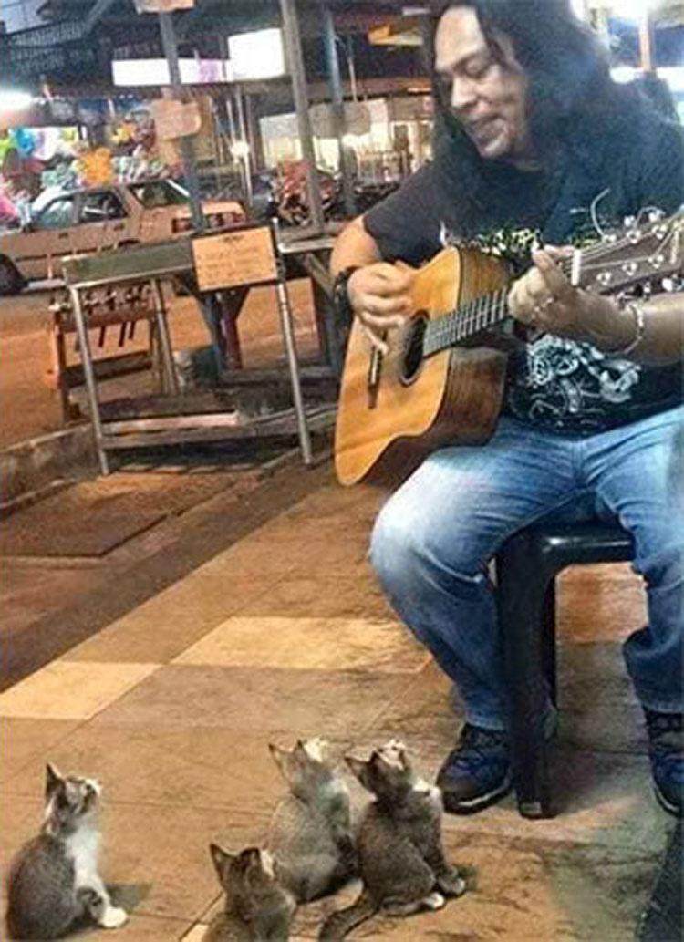 Este músico callejero estaba a punto de dejarlo, pero entonces se presentaron estos gatitos... 2