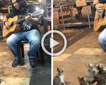 Este músico callejero estaba a punto de dejarlo, pero entonces se presentaron estos gatitos...